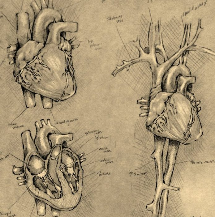 examine the heart test yourself believe question