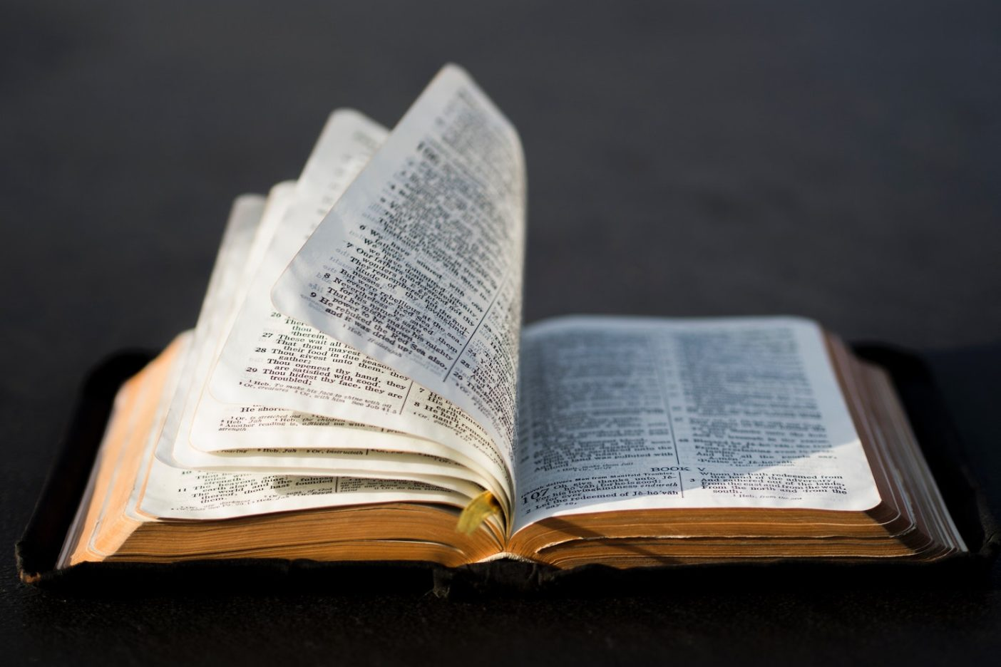 How to Read Your Bible: A Primer